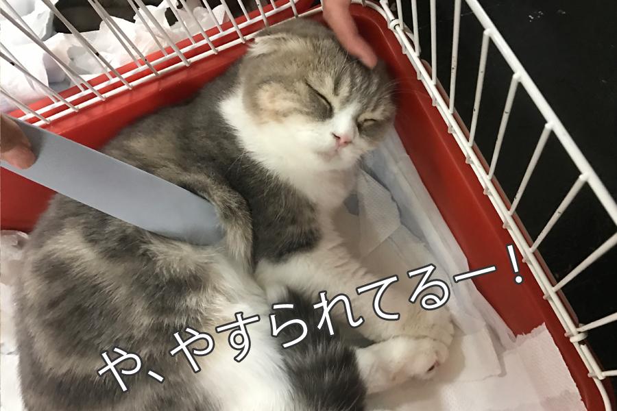 猫が喜ぶブラシ