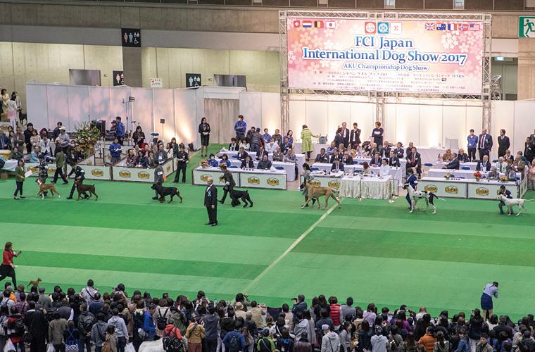 犬種の理想とされる犬種標準(スタンダード)をもとに比較審査する「品評会」