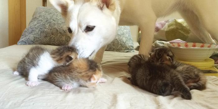 生まれたての子猫の世話をするバビ