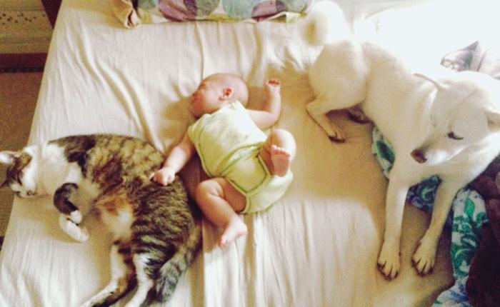 猫と犬の兄弟に囲まれたゴゴリン