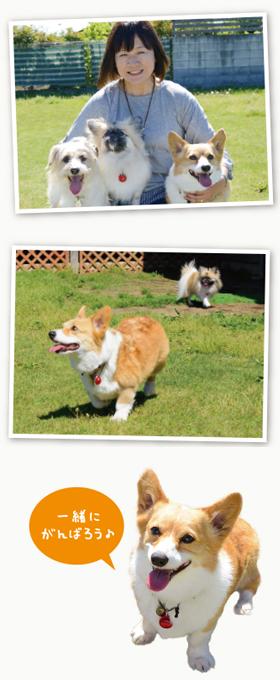 普段からペット防災の知識があれば、自分も周りの人も、愛犬も幸せにできます。