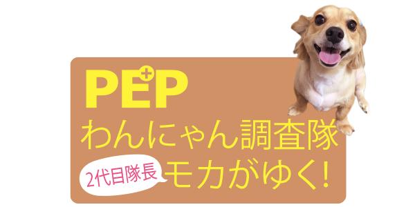 PEPわんにゃん調査隊2代目モカがゆく!