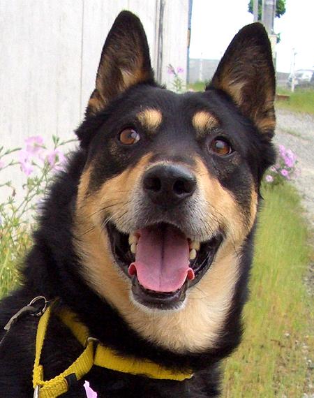 ミックス犬ランディ
