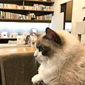 小さなお庭と猫の図書館
