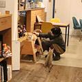 猫がいるカフェ『ダイスカフェ』~京都の旅 Part.1~
