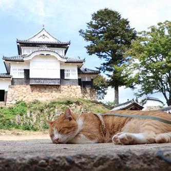 【わんにゃん調査倶楽部】V字回復の招き猫 『岡山・備中松山城』 ~天空の城とさんじゅーろー~