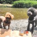 ルカとミエルの 今日も犬日和