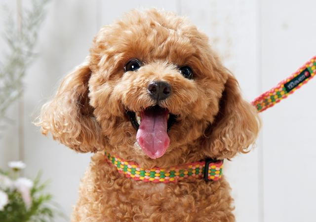 手織り犬具ウーブンプラス