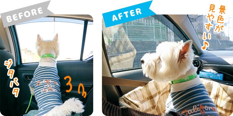 車内での愛犬の様子