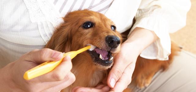 犬の歯磨きは完璧でなくてOK!嫌がるわんちゃんの歯みがき法