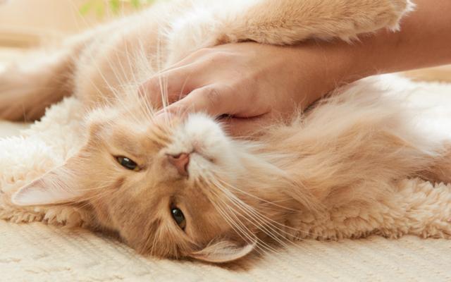 猫が撫でられるとうれしいポイントと絆を深めるコミュニケーション術