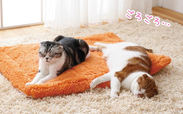 猫がリラックスしているとき