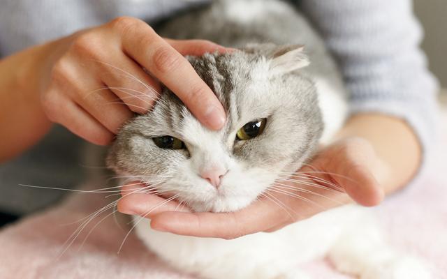 プロに聞いた愛猫とのコミュニケーション