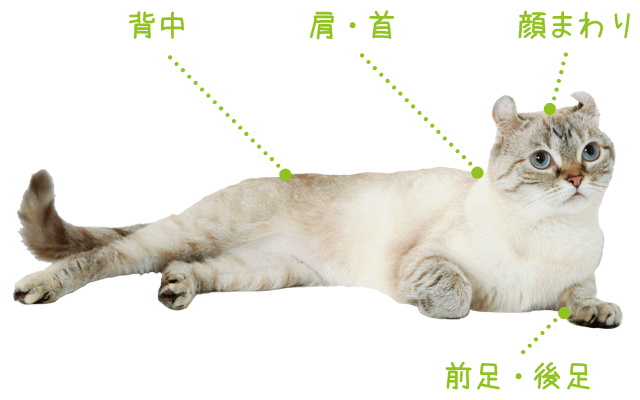 猫が喜ぶ4つのポイントと触り方