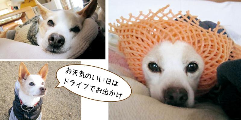 ミックス犬のレオちゃん14歳