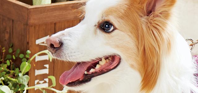 犬の歯は人と違う!虫歯ではなく歯周病が多い理由と歯の仕組み