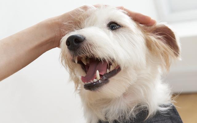 犬の歯の仕組みと歯の種類