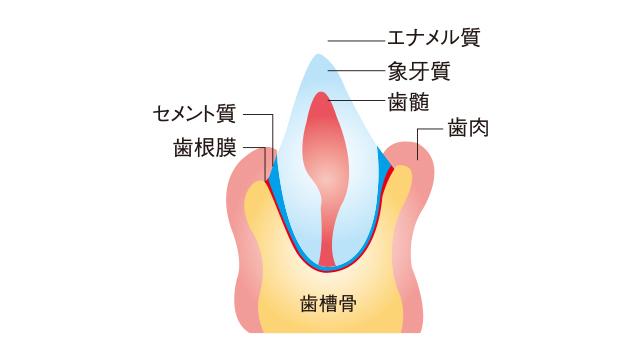 虫歯や歯周病だけでない口の中のトラブル