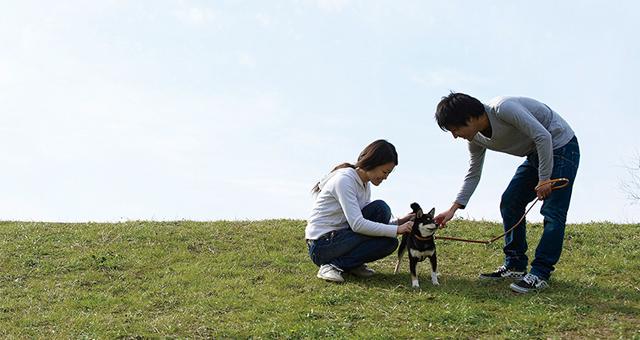 被災時に愛犬を守る方法と用意しておきたいもの