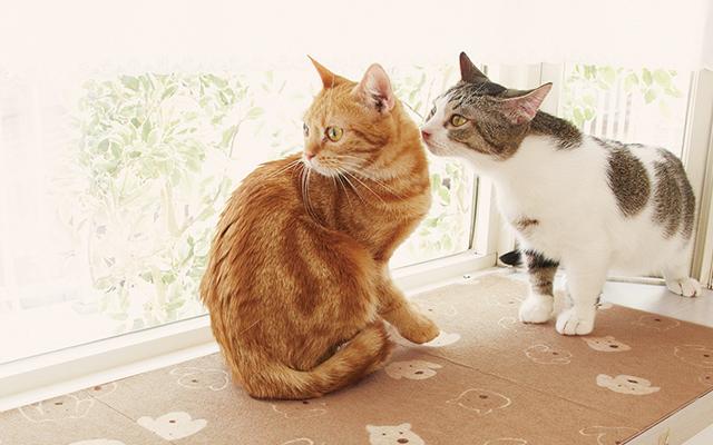 被災時に愛猫を守る方法と用意しておきたいもの
