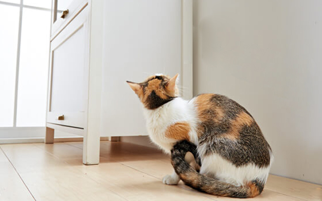 自分と家族と愛猫の状況