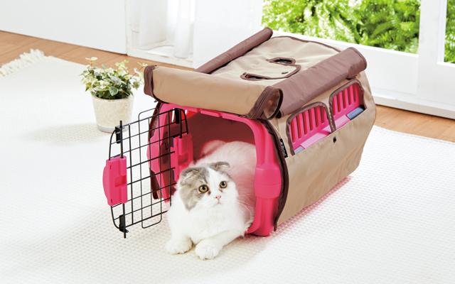 やっておくべき愛猫の防災準備
