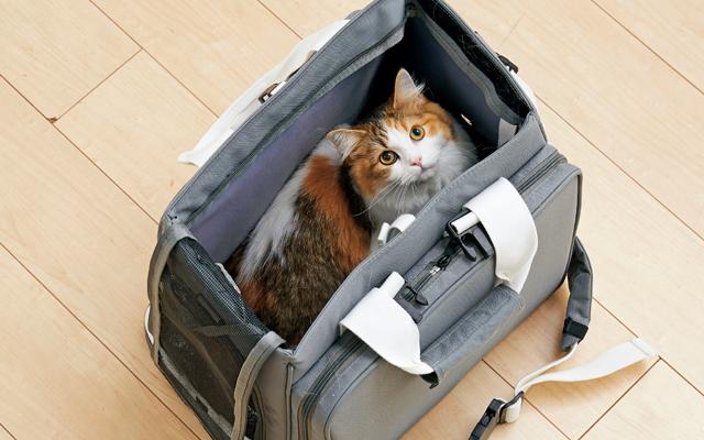 愛猫との棲み分け