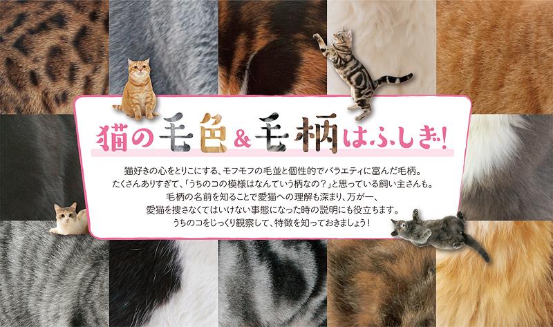 猫の毛色&毛柄はふしぎ!