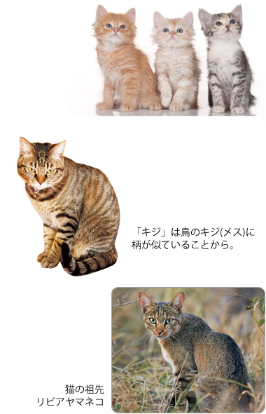 父親が違う猫の兄弟