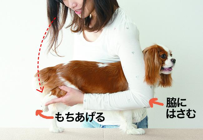 小型犬の保定方法