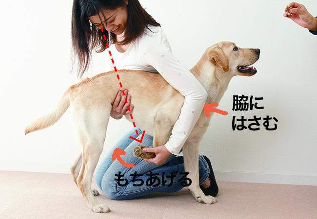 大型犬の保定方法