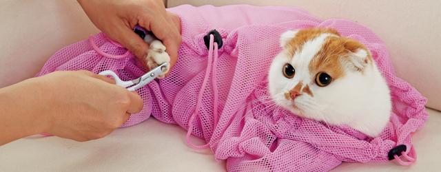 猫の爪切りの方法と成功の秘訣!