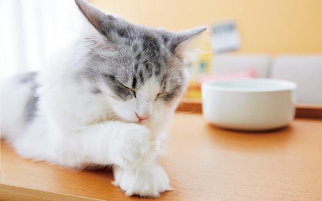 猫の爪を伸ばしたままでは危険