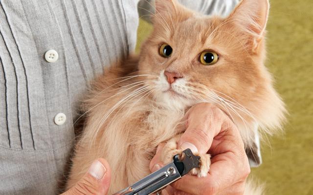 嫌がる猫の爪切りを成功させるコツ