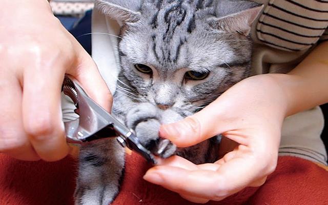 爪切りが苦手な場合は、手軽に使える爪やすりパッドや電動爪やすりなどの便利なアイテムも