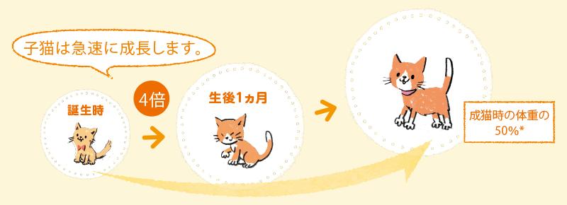 子猫は急速に成長します。