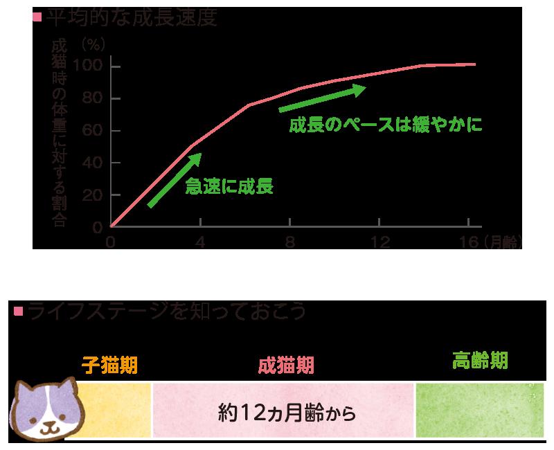 犬種によって異なる子犬期・成犬期・高齢期