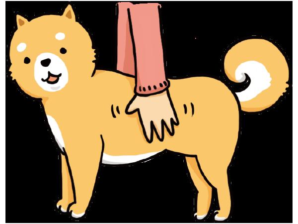 愛犬の肥満チェック!胸や脇腹を触る