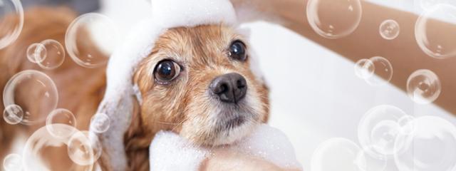 犬のシャンプーを上手にする方法
