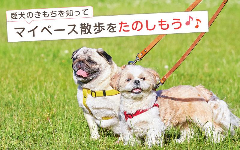愛犬のきもちを知ってマイペース散歩をたのしもう♪