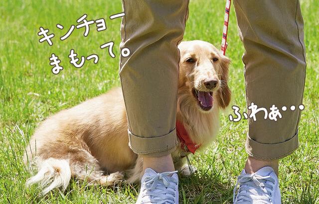 犬のあくびの意味