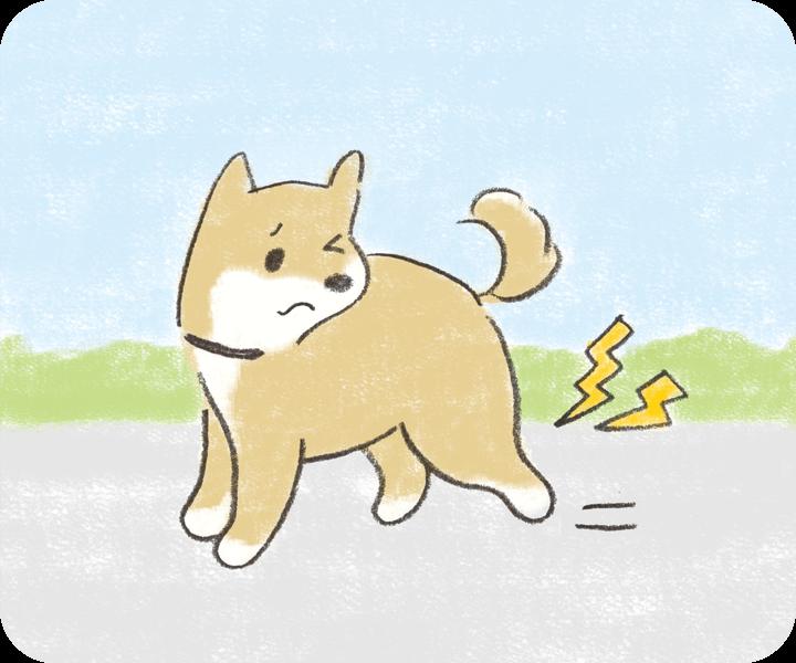 犬が足をひきずって歩いている