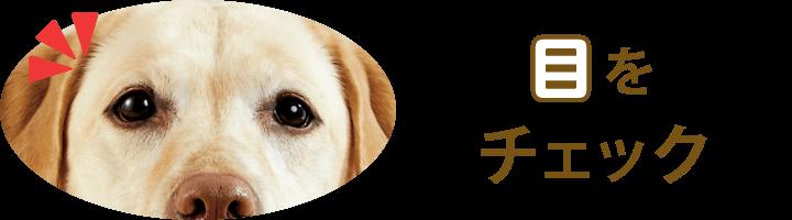 犬の目をチェック