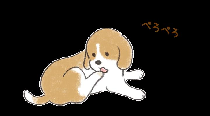 犬が体の一部をしきりに舐めている