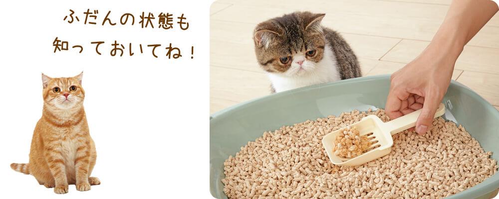 猫のトイレ掃除で健康チェック