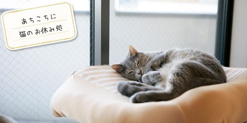 あちこちに猫のお休み処