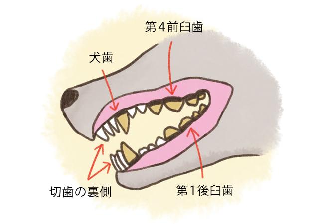 犬の歯ブラシに挑戦!