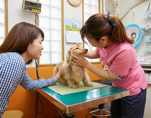 愛犬の歯を磨く練習