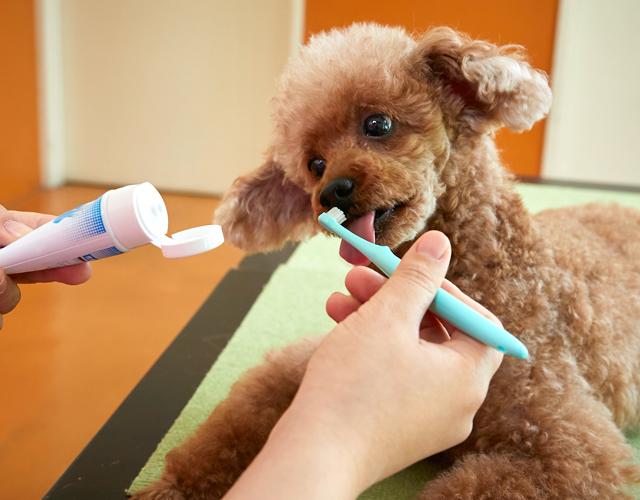 ペットのデンタルケアや口臭の予防