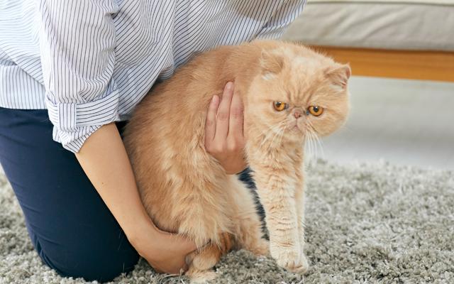 猫の両脇に片手をいれて、上半身をゆっくりと持ち上げます